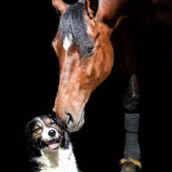 hund_pferde_haftpflicht
